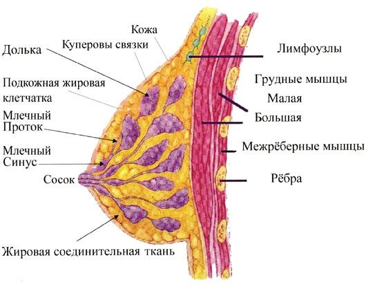 zastoy-spermi-korichnevie-videleniya